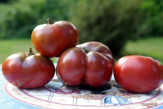 """Cherokee Purple - Cherokee Purple is a good sized tomato with the excellent flavour so typical of 'black tomato"""" varieties. Will add vibrancy to fresh tomato dishes."""