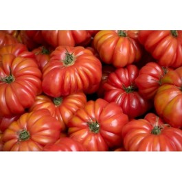 Costaluto Fiorentina - Tomato 'Costoluto Fiorentino' is a medium-sized, delicious, juicy Italian variety of tomato which can be eaten raw, roasted or cooked in Mediterranean dishes.